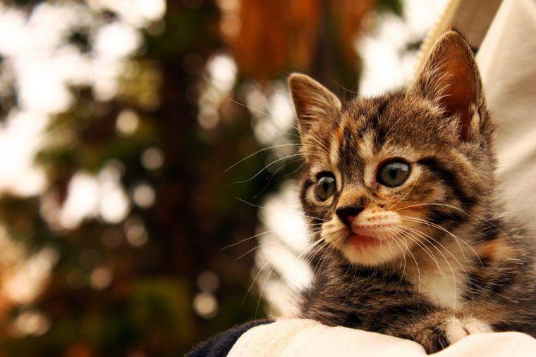 猫の年齢を人間に換算すると? 年齢早見表、顔や歯で見分ける方法も