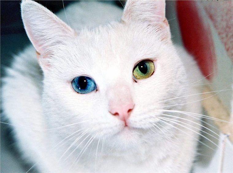 猫の不整脈 | 症状と原因、治療・予防法を循環器認定医が解説