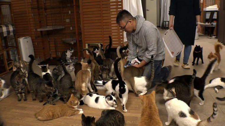 猫ブームの裏にある現実 テレ東で猫の保護活動に密着したドキュメンタリーを放送