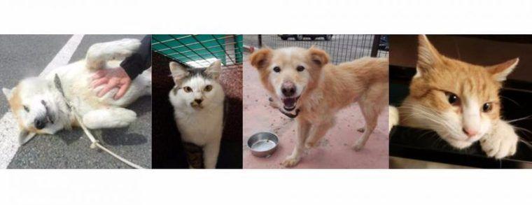 福島県動物愛護センターが4月22日(土)に犬猫譲渡会を初開催 県民以外への譲渡も可能
