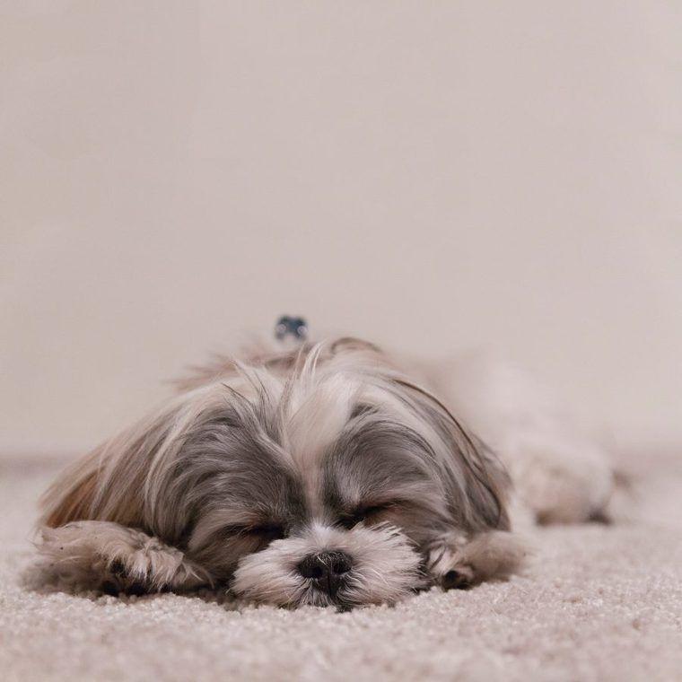 犬の慢性気管支炎 | 症状や原因、治療・予防法など認定医が解説