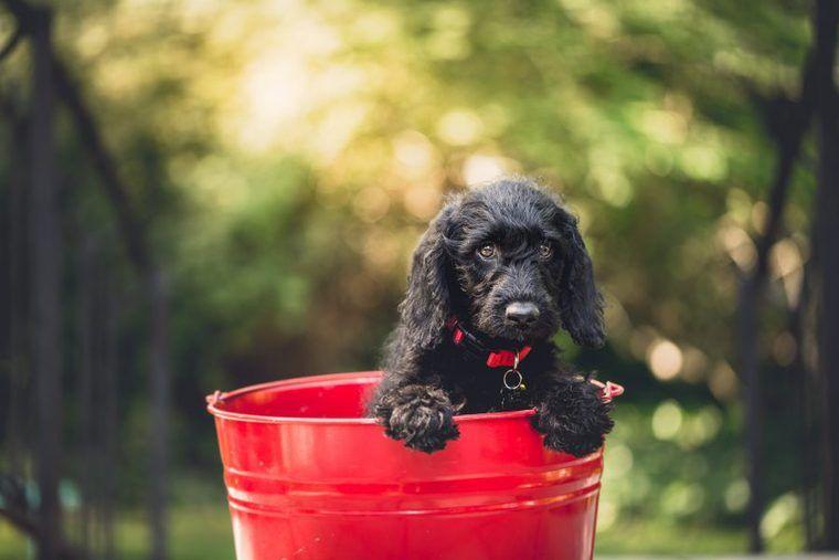 犬の拡張型心筋症 | 症状や原因、治療・予防法など認定医が解説
