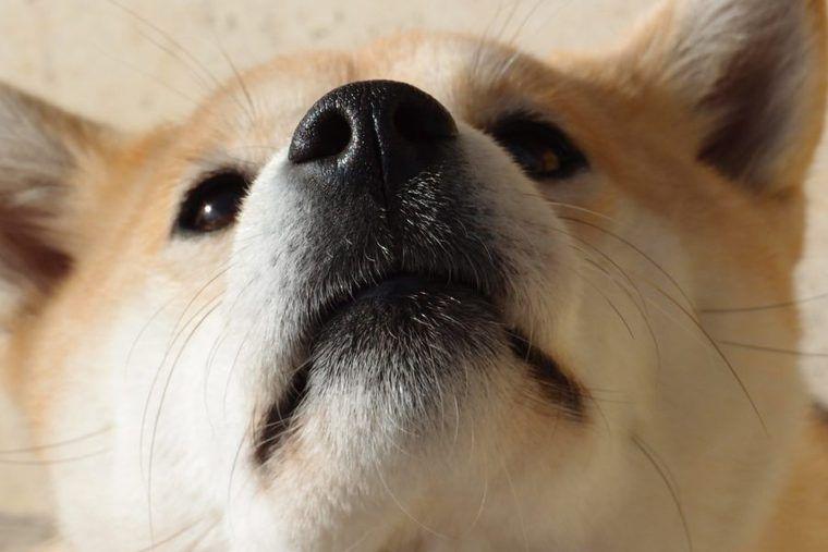 犬の胸水(血胸/膿胸/乳び胸含む)   症状や原因、治療・予防法など認定が解説