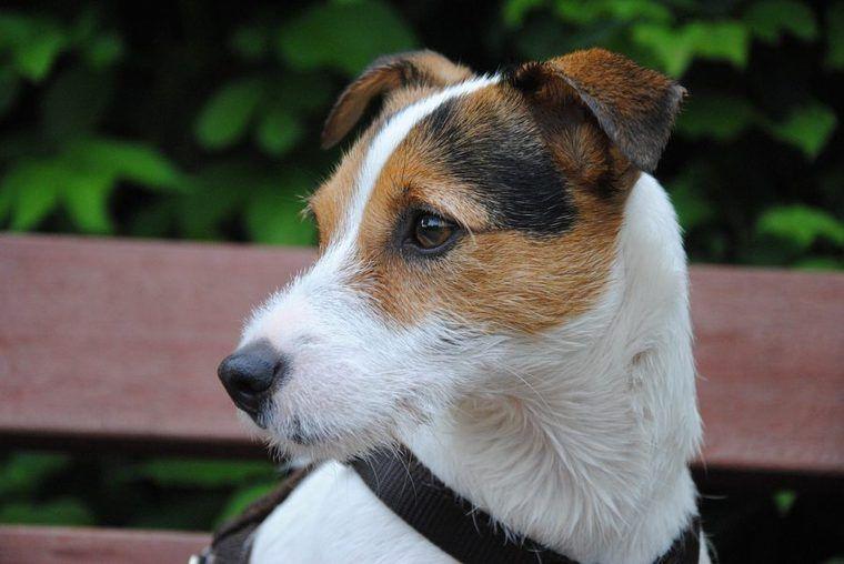 犬の水腎症 | 症状や原因、治療・予防法など【腎・泌尿器科専門獣医が解説】