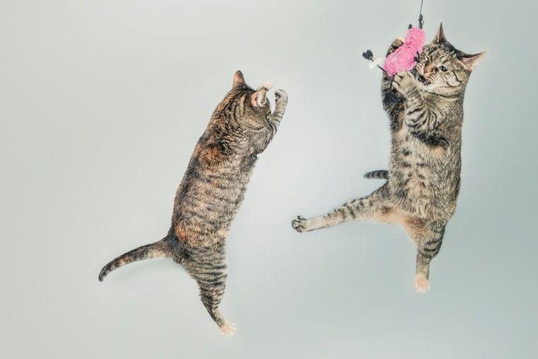猫の皮膚糸状菌症(猫カビ)とは | 症状や原因・治療法・薬など【認定医解説】