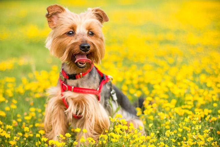 【腎・泌尿器科専門獣医が解説】犬の尿石症 | 症状や原因、治療・予防法など