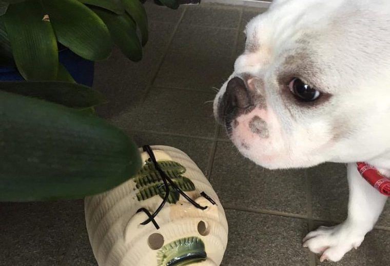 犬に蚊取り線香は大丈夫? 煙の害や誤飲、やけどに注意