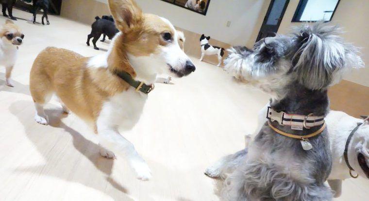 関東近郊の室内ドッグラン22選 雨の日も愛犬とお出かけ!