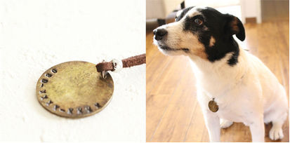 迷子札普及を目指しクラウドファンディング 保護犬の飼い主募集サイト「OMUSUBI」とコラボ