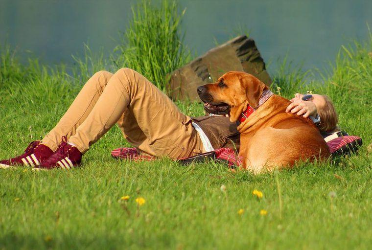 大型犬は優しい性格が多い!? 人気犬種ランキングや基準、寿命について解説