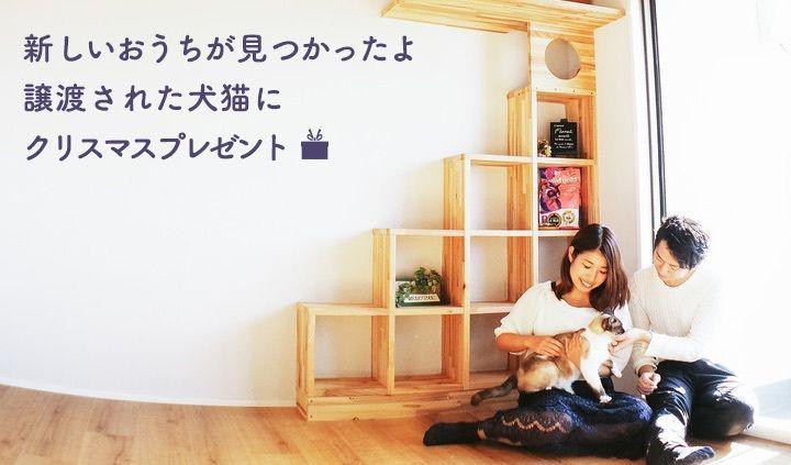 【期間限定】OMUSUBIで新しい家族に迎えられた保護犬猫に「フロントライン」をプレゼント