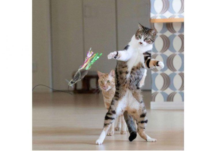 猫じゃらしの作り方・遊び方は? ポインター式や電動などオススメおもちゃも