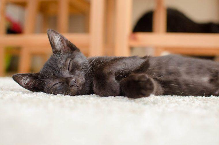 日本猫に純血はもういない!? 種類や性格、キジ猫・三毛猫など人気の毛色を紹介