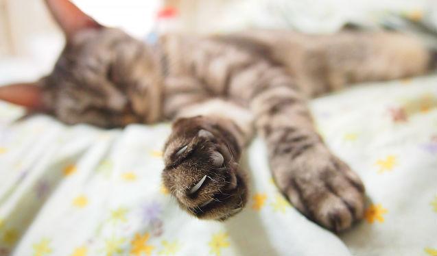 猫の爪切りのオススメやコツ、やり方・暴れる場合の対処法をトリマーが解説