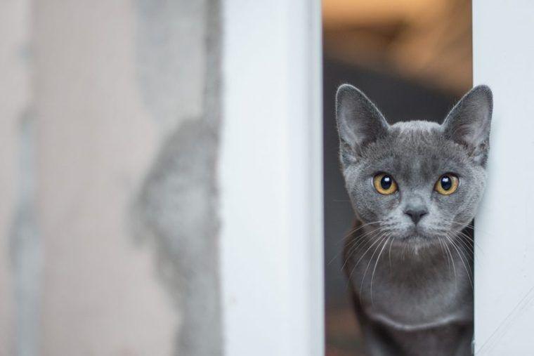 猫がすりすりしてくるのはなぜ? 噛む理由や帰宅時・お風呂上がりの意味を解説