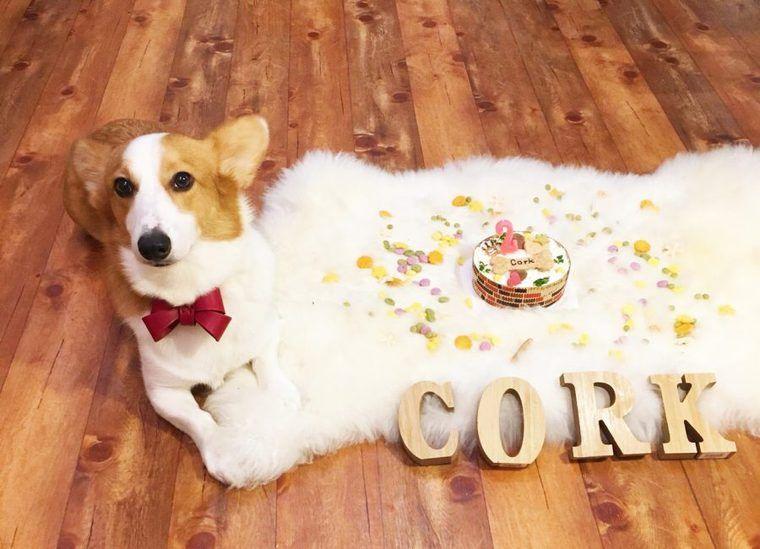 保護犬出身だった社員犬コルクが2歳の誕生日を迎えました。【今日のシロップ】