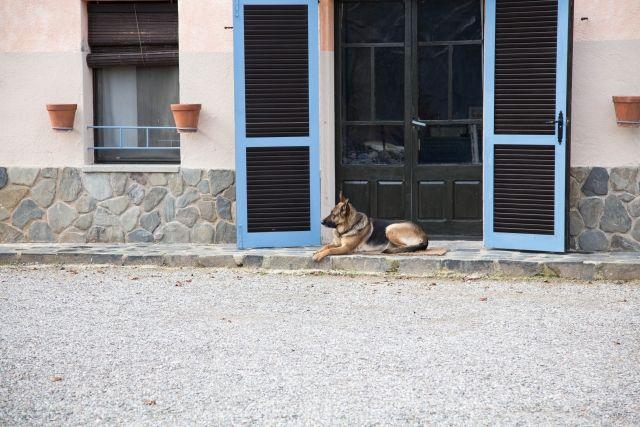 スペインには犬に「人権」を与える条例がある!? 日本との飼育事情の違いを紹介