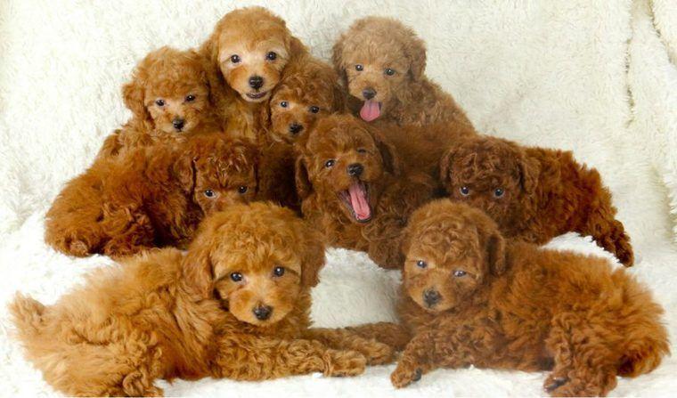 犬の値段はどうやって決まるの? 高いor安い理由や犬種別の相場価格をプロが解説