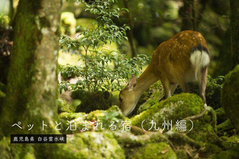 【九州】ペットと泊まれる宿 部屋食や温泉、コテージなどの特徴別に紹介