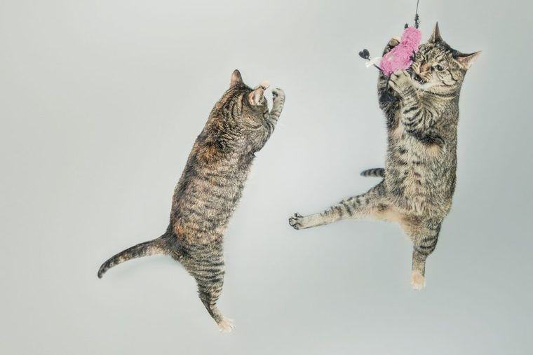 猫の運動会はいつまで続く? やめさせる方法やマンションでの対策を紹介