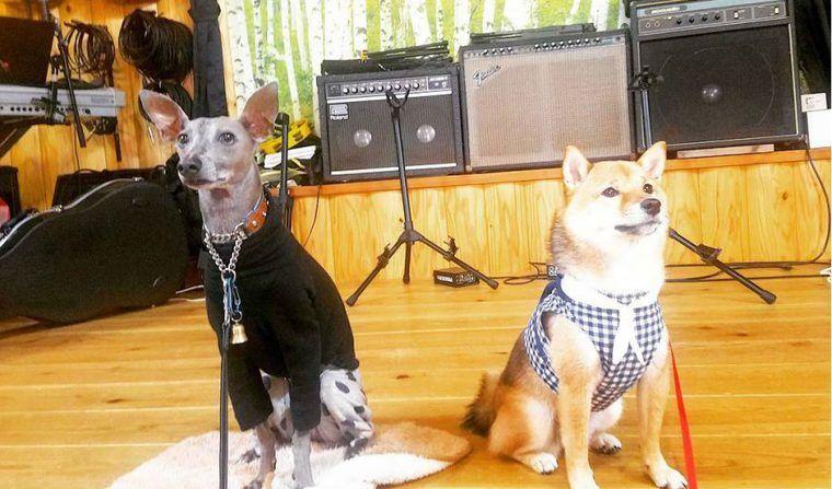 兵庫県の犬同伴OKドッグカフェ17選!神戸や明石などの人気の夜営業やおしゃれなカフェを紹介