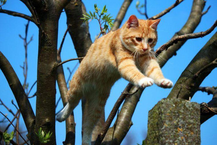 猫のジャンプ力は人間にすると何mくらい? できなくなった時の注意点を解説