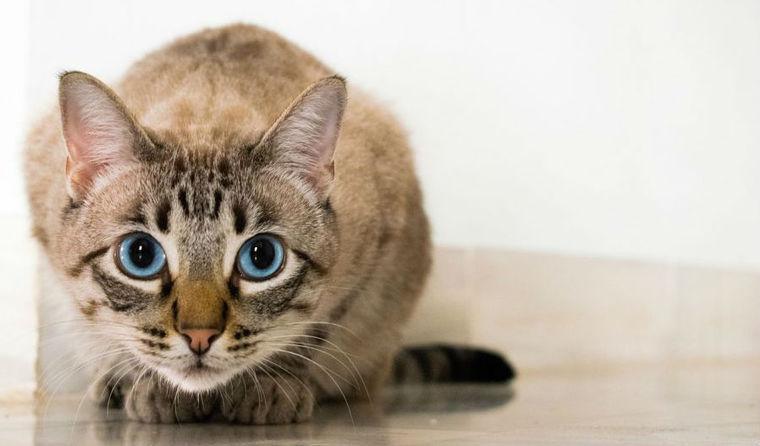 猫は洗濯ネットでおとなしくなる!? 爪切りやシャンプーで役立つ専用グッズを紹介