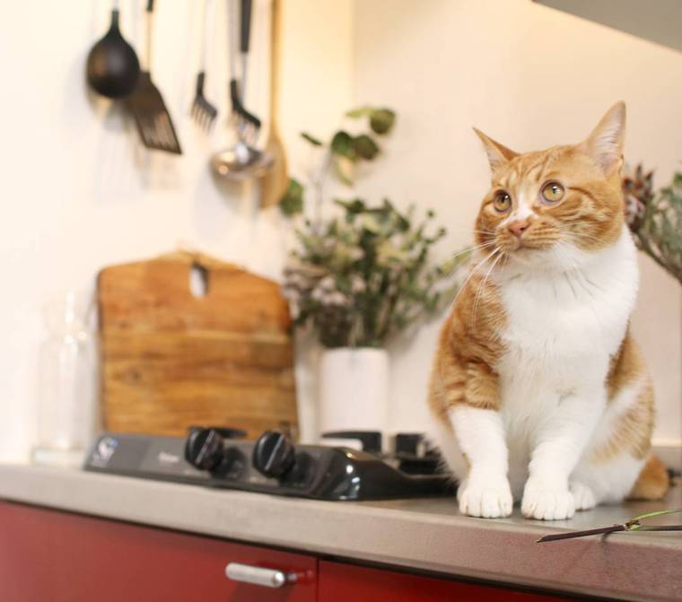 【猫との暮らし】キッチンが気になる猫たちの生活風景