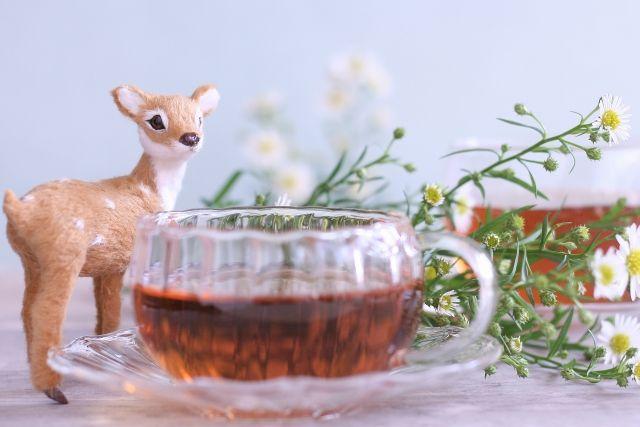 犬は紅茶を飲んでも大丈夫? カフェイン中毒を引き起こす危険性も
