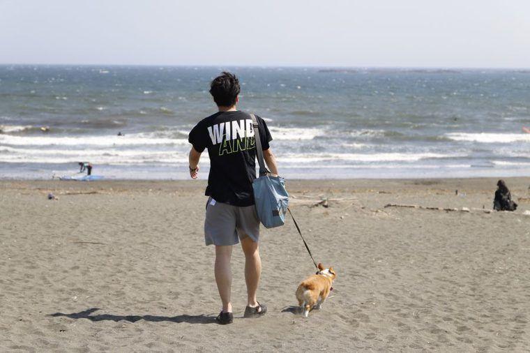 海は心をリセットしてくれる。社員犬コルクと湘南にお出かけしてきました【今日のシロップ】