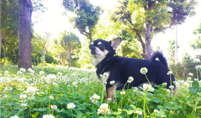 スマホカメラも「構図」を意識して、愛犬をいつもよりかわいく♪【犬の写真の撮り方】