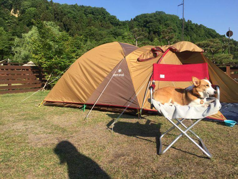 緑あふれる自然の中で、愛犬コルクと初キャンプ!【今日のシロップ】