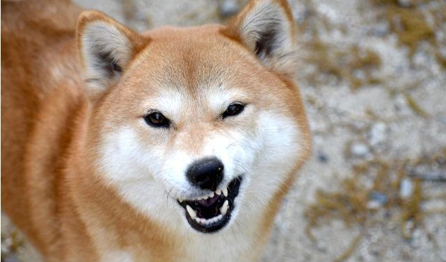 感情が不安定な人は犬に噛まれやすい!? 咬傷事故の実態を海外論文から紹介