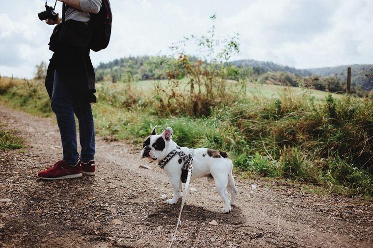 犬を無視するしつけの効果的なタイミングと時間|犬が飼い主を無視する理由を解説