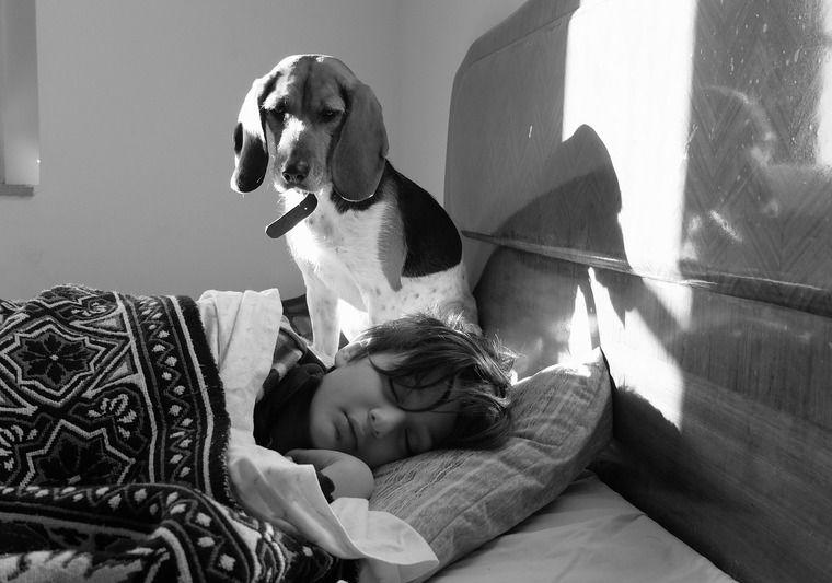 犬が飼い主を起こすのには理由があった|優しくなめて起こされたら許してしまう?