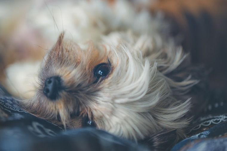 犬は正しい叱り方でしつける|マズルをつかんではダメな理由と大切なポイントについて