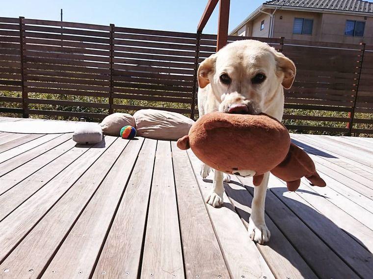 【犬との暮らし】何して過ごす? ウッドデッキでくつろぐ犬たちの生活風景