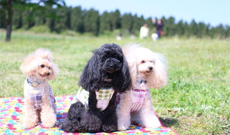 犬OKのキャンプ場〜九州編〜 ドッグランのある施設や、近くに温泉のあるところも!