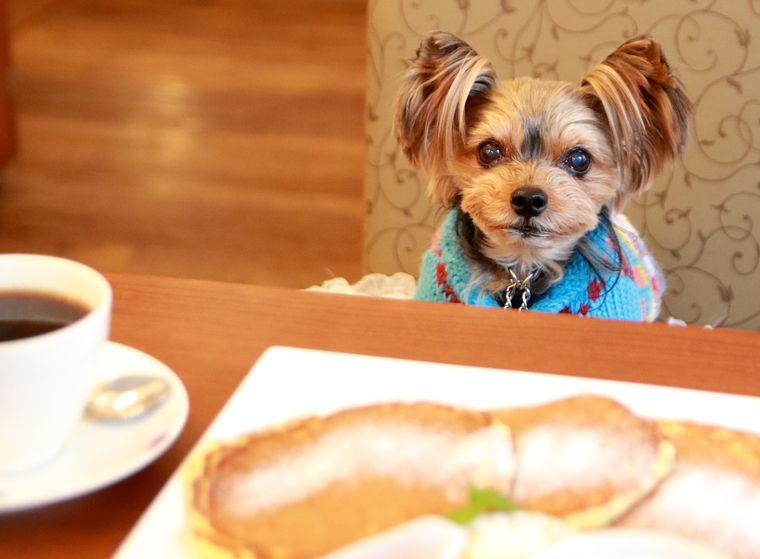 徳島のおすすめドッグカフェ10選 犬用メニューやサロンでちょっと贅沢な休日を