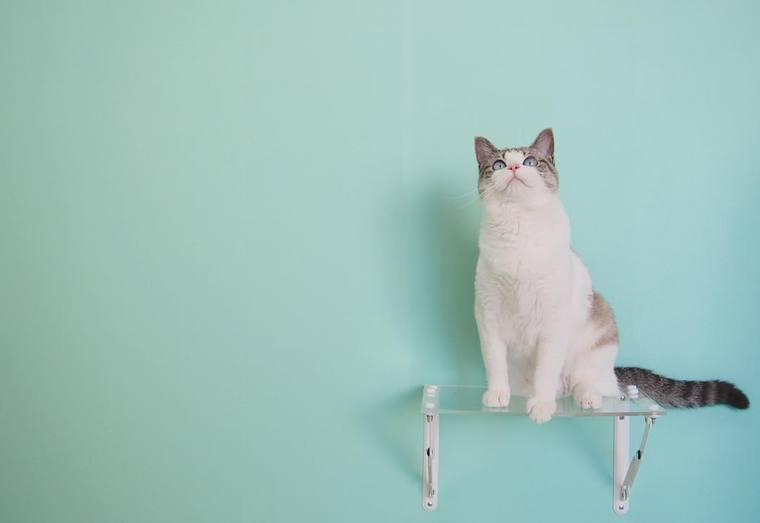 猫の吊り橋8選|セミオーダーできるタイプや壁に取り付けるタイプなど