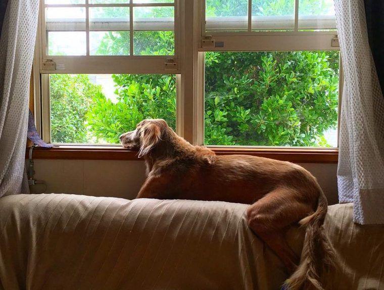 【犬との暮らし】窓辺は犬の特等席? 犬と窓のある生活風景