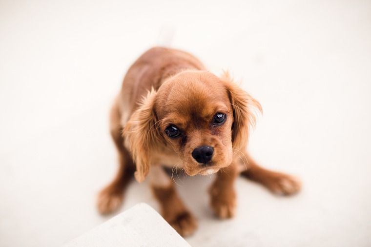 子犬のしつけはいつからはじめる? 失敗させない工夫とルール決めが大切