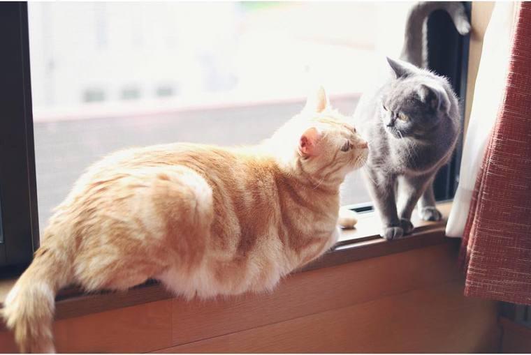 【猫との暮らし】窓辺に集まってくる猫たち 猫と窓との生活風景