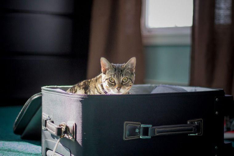 猫を飼うと旅行に行けない? お留守番のポイントと一緒に連れて行くときの注意点