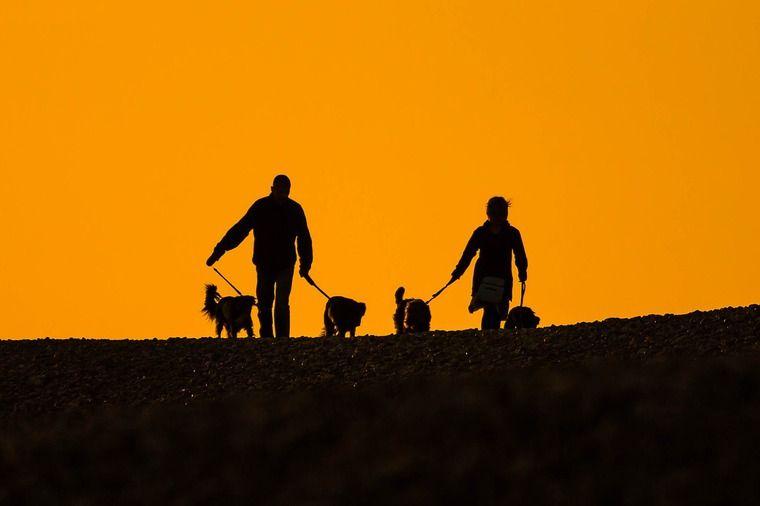 犬は家族を順位付けするの? リーダーになるしつけはもう古い