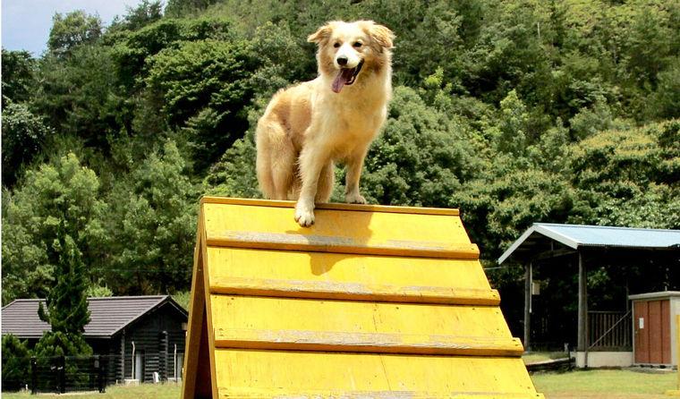 和歌山のドッグランおすすめ15選 橋本や西浜もあり