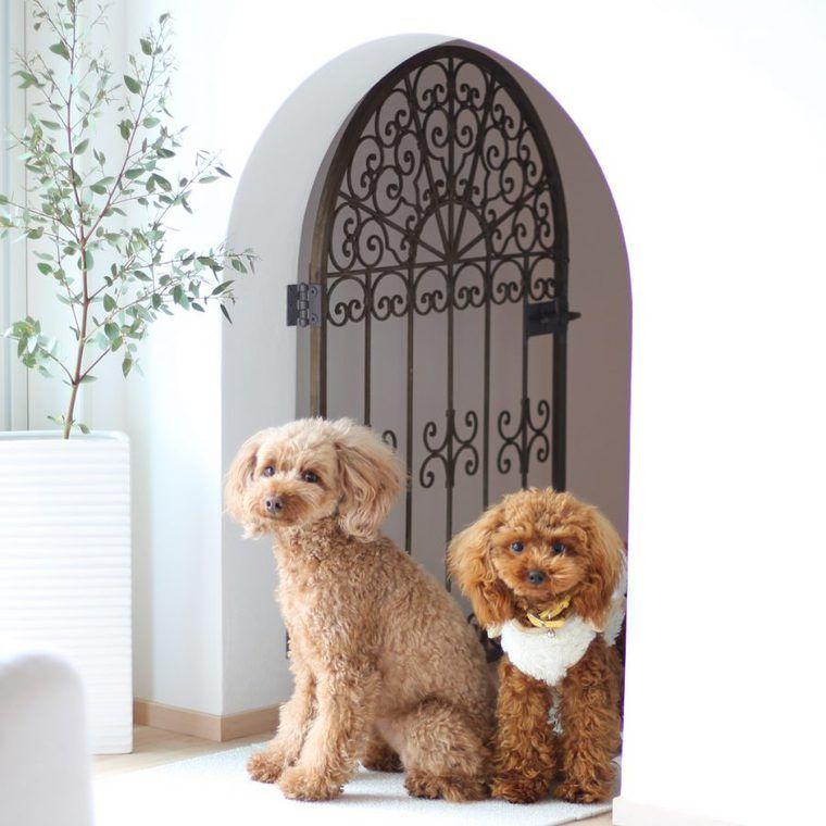 【犬との暮らし】憧れのドッグスペースで過ごす犬たちの生活風景