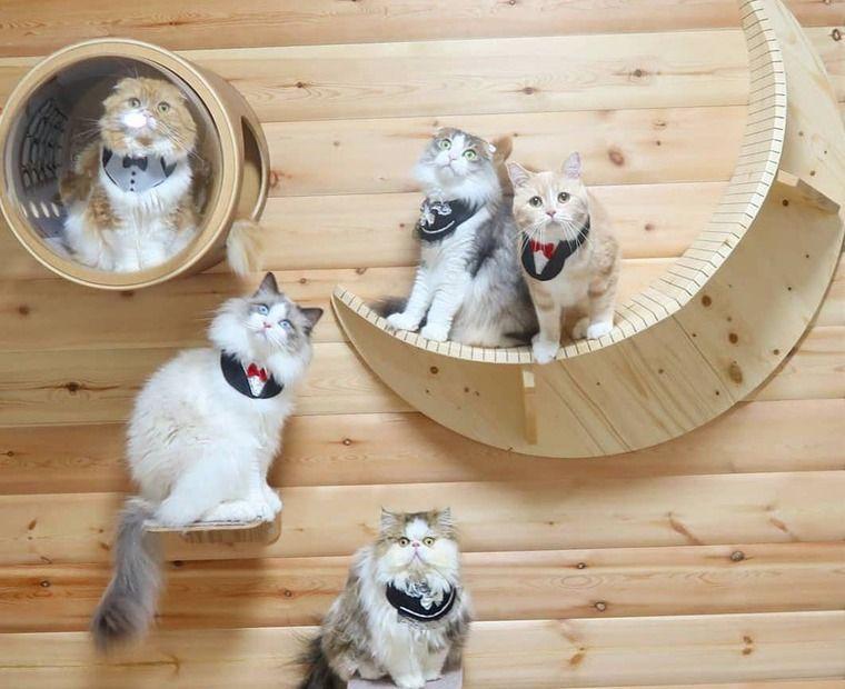 【猫との暮らし】猫以外立ち入り禁止♪ 猫とキャットウォークのある風景