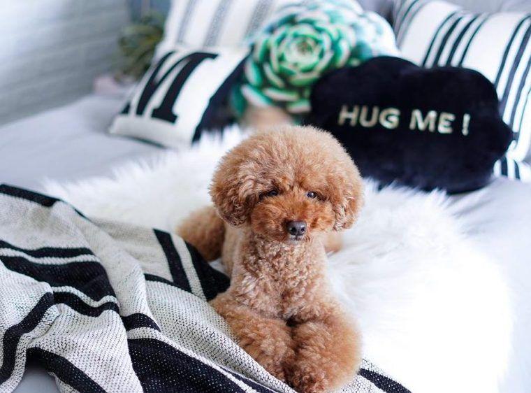 【犬との暮らし】飼い主さんのベッドでくつろぐ犬たちの生活風景
