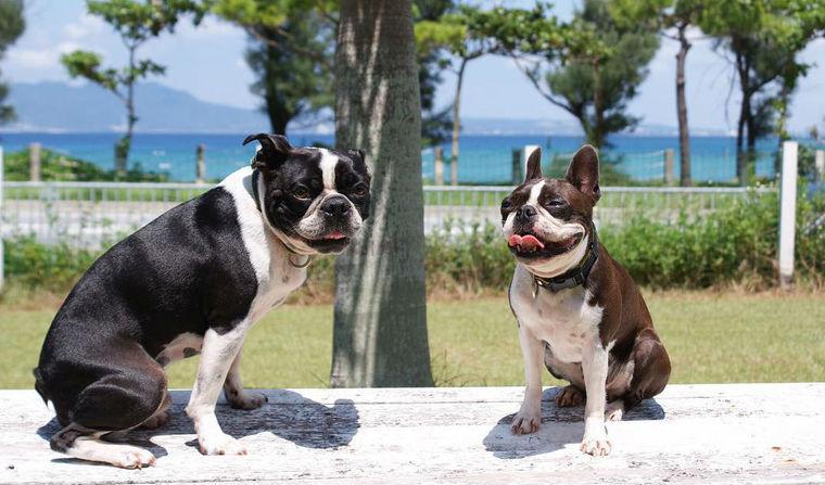 沖縄のおすすめドッグラン9選 沖縄のキレイな海を楽しもう!